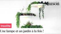 Insolite : lampe et jardin à la fois !