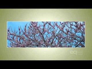 Roberta Bondar Talks the Art of Ecology