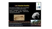 Les insectes fossiles : une longue histoire de petites bêtes (5/5)