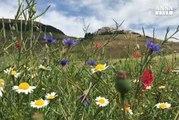 Sisma: per la fioritura tornano i turisti a Castelluccio di Norcia