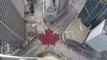 Time-lapse shows Winnipeg's largest 'living' maple leaf as tribute to Canada 150 celebrations