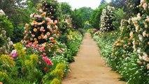 A Natureza se revelando através das mais  belas flores, rosas,  arbustos e jardim colorido