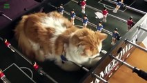 Funny Cats in Weird Sleeping Positions! - Funny Kitty Cats, Funny Cat Videos 2015 , Funny