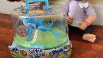 Vivant bébé bain grenouille drôle petit vivre animaux domestiques étincelles le le le le la avec