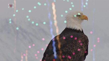July 4th 'Miracle' Bald Eagle Rescued In Washington, D.C.