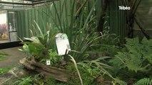 La disparition de nombreuses espèces végétales bretonnes