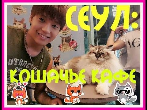 국제커플: 고양이 카페에 가다. VLOG: Замученные кошки! Сеул:Кошачье кафе! / Cat Cafe in Seoul !
