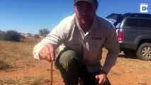 Moment daredevil reptile rescuer is lowered into well containing five of world's most deadly snakes