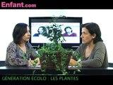 Génération écolo : les plantes dépolluantes
