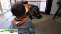 funny animals ツ funny animals arguing ツ cute animals show