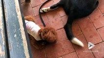 J'en peux plus de sa queue à ce chien... Pauvre toutou