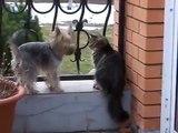 Komik Kedi ve Köpek Videoları en komikler
