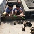 L'heure du repas pour ces tortues... Trop mignon
