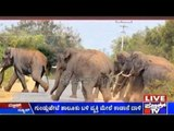 Villagers Annoyed By Elephant Herd Moving Into Their Villager