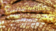 BBC Horizon - s0000e60 - Extinct_ A Horizon Guide to Dinosaurs