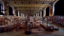 Visite virtuelle de la Galerie d'Anatomie comparée