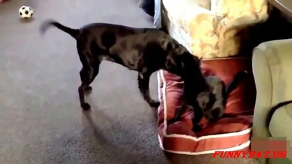 Cat and Dog Fight for bed