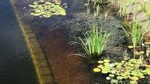 Un et un à un un à construire bricolage Comment naturel Bio piscine à Il