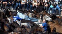 Riders Wrestle Wild Horses at Traditional Mane-Shearing Festival