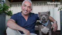 Cesar Millan's rules before getting a new puppy