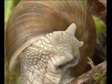 Naturimages - Escargots