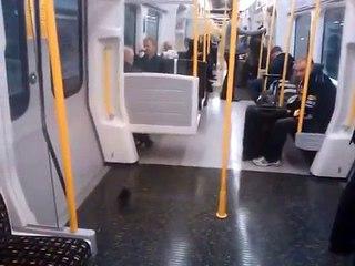Un pigeon prend le métro et en sort comme si de rien n'était