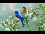 Les animaux du printemps