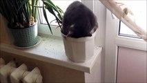 Ce chat dort la tête dans un pot de fleur... Même pas mal à la nuque
