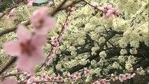 岩本秀⼀の日本の春の花