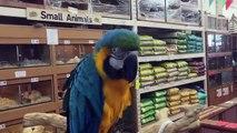 À larrière babouin plume aliments pour animaux première aliments jambe achats tarentule Plus stromatopelma calceatum
