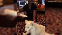 Patrice Evra et son lion de compagnie