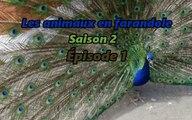 Les animaux en farandole: saison 2: épisode 1