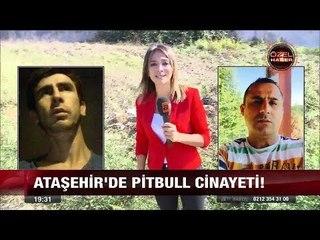 Ataşehir'de Pitbull cinayeti! - 5 Ekim 2017