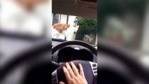 !! اكثر المقاطع المضحكة للقطط لما تخاف // ردّة فعل القطط الخائفة تموت من الضحك