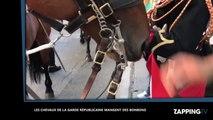 Découvrez l'étonnant repas des chevaux de la garde Républicaine (vidéo)