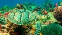Tortuguero, le paradis des tortues au Costa Rica