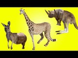 Wild Safari Animals with Wrong Body | Funny Animals Video for Kids | Fun Toddler Learn Animals