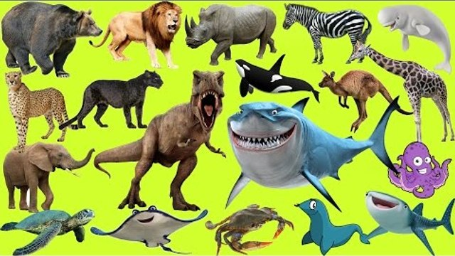 Learn Animals for Kids | Sea Animals | Wild Animals | Farm Animals | Dinosaurs for Kids - 50 MIN