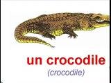 Les animaux Zinzins ont étudié les noms danimaux en français