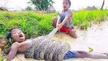 Terrifying!! Brave Little Kids Catch Big Snake in Water While Finding Snails in the  fields