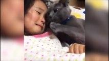 Ce chat adorable console cette petite fille en pleures... Trop mignon