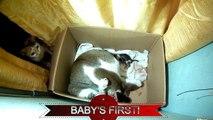 Ordinaire travail chat tendu avec trois chatons mignons