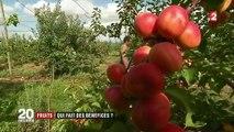 Fruits : l'abricot, une filière en crise