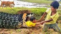 Terrifying ! Brave Brothers Catch Big Cobra From Hole While Finding Snakes