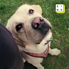 Dogs are saving Veteran lives