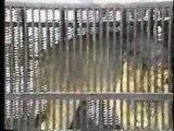 Spot peta espagne - Non aux animaux dans les cirques