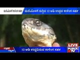 Sakleshpur: 12 Feet Long King Cobra Found Inside A Residential House