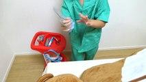 Bébé ours naissance docteur donnant noisette jambe en jouant chirurgie bébé Chirurgie naissance Inju ours Play médical