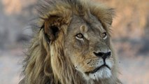 Cecil the Lion's Son Killed by Trophy Hunter in Africa