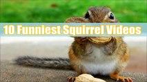 Et les meilleures tamia mignonne le plus drôle drôle écureuil vidéos Compilation danimaux